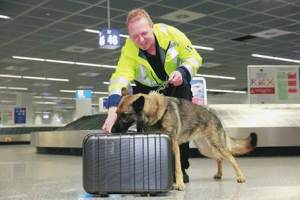 Taking stowaway bedbugs home from your trip? FRAPORT sniffer dogs bark no!