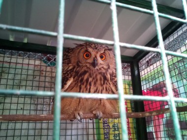 An owl at the sanctuary