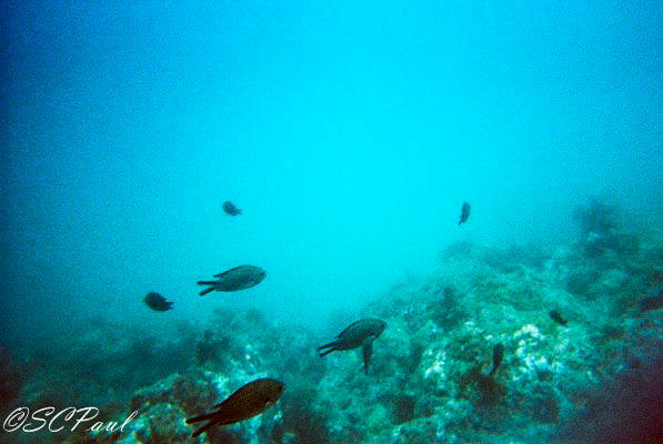 Little fishes we saw :)