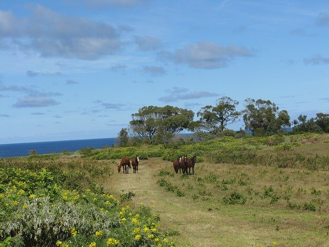 The Top Six things to do on Easter Island | A View To A Thrill