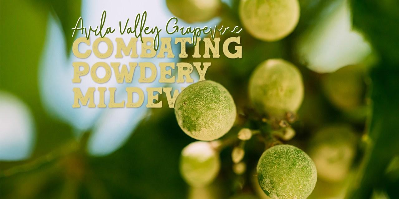 Combating Powdery Mildew