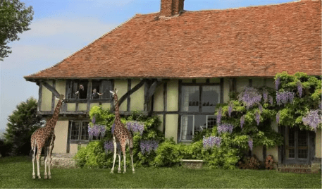 Holiday with the giraffes