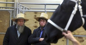 Amish Men and Horse