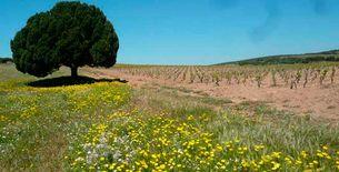 vigne-sur-sable_CO