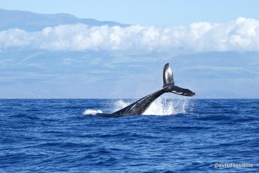 activites voyage ile aux natte sainte-marie madasgascar baleine
