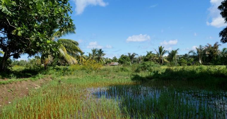8 activités pour découvrir Sainte-Marie et l'île aux Nattes