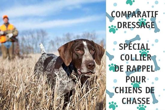 Classement des meilleurs colliers de dressage pour chien de chasse