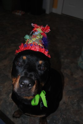 Jax and his birthday crown