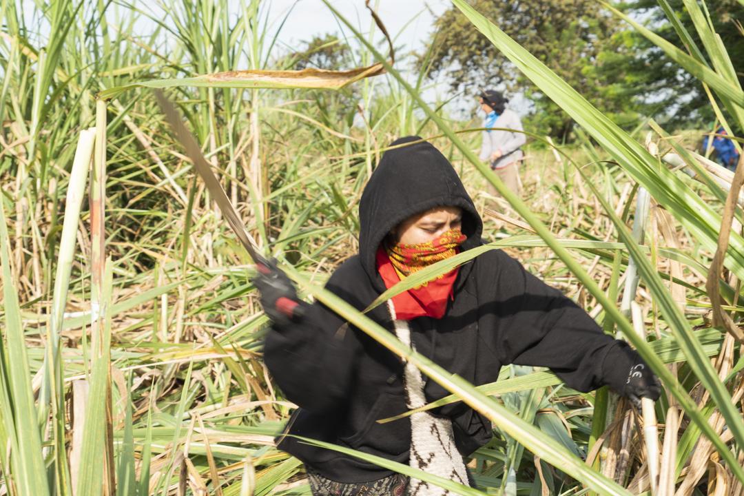 Indígenas recuperan tierras despojadas por la industria de la caña