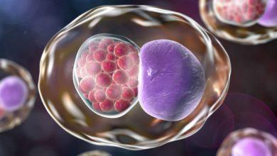 Gyógynövények gyógyító prosztatagyulladás és adenoma