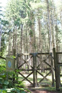 the gate into the forest of O-shima