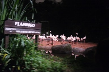 blurry Flamingoes