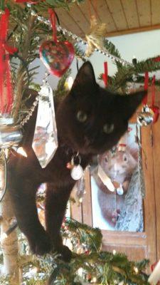 Midnight Kitten just loves Christmas at Avoca Gallery.
