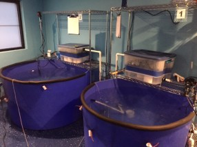 Our fish hospital