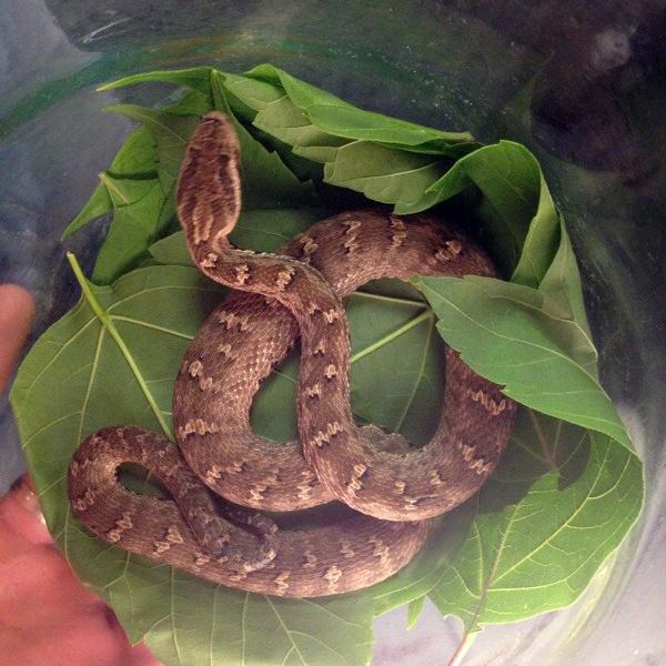 интерактив юбилей, змеи хакасии фото проблему может