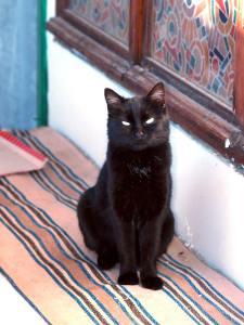 Кошка Багира. Фото мое © 2009