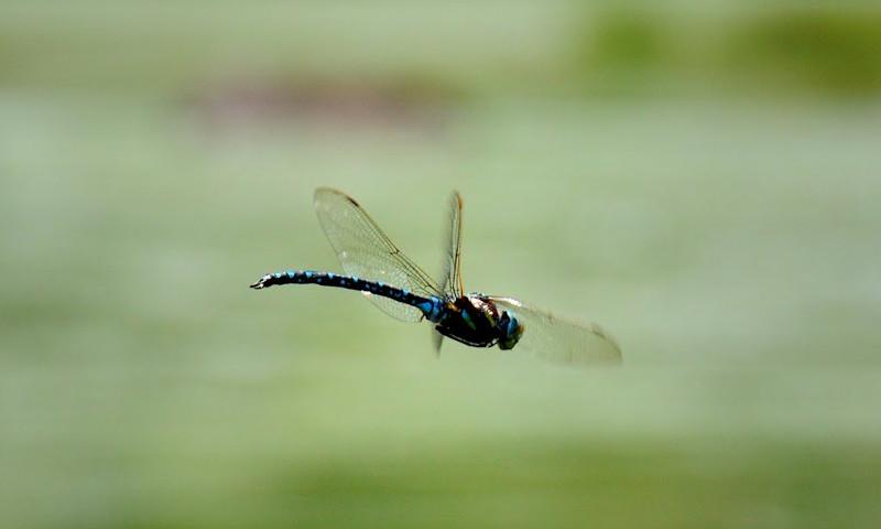 libellulaarticolo