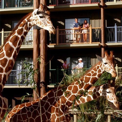 Choosing a walt disney world resort deluxe choices - 2 bedroom villa animal kingdom kidani ...
