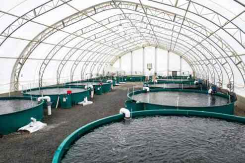 Sample of Fish Farm Cost Analysis