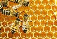 Effect of Raw Honey to Infants and Adults