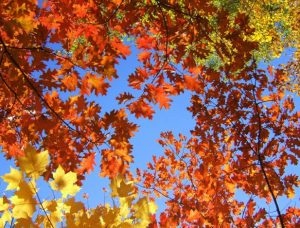 fall_leaves_617