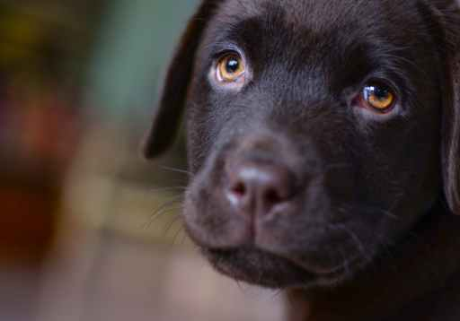 Adoring puppy dog eyes melting our heart chakra.