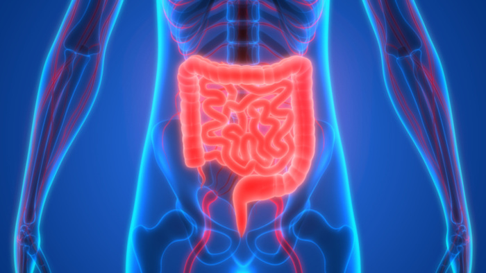 How Gut Health is the Key for Body & Mind