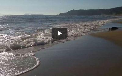 Usha Bala Elo (video)