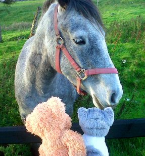 Tiger & Connemara ponny