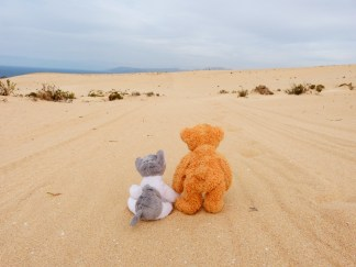 Walking through desert
