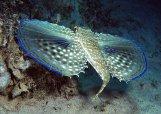 Gozo scuba diving