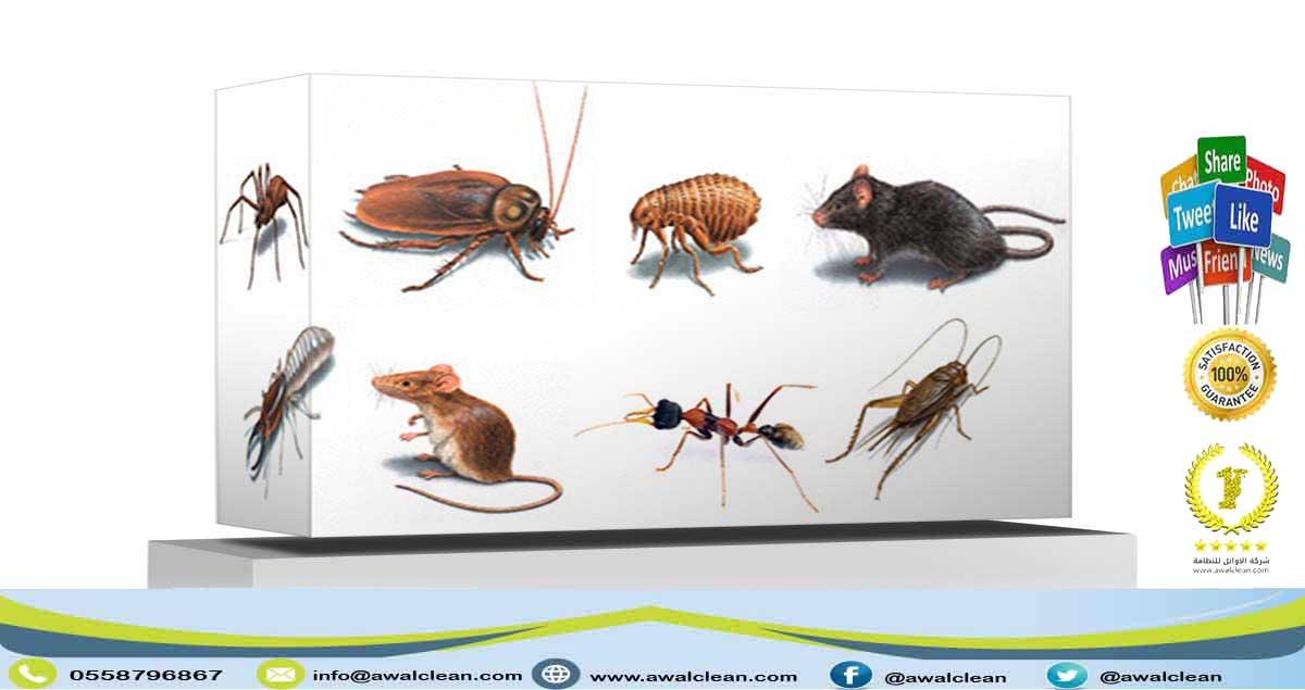 مجموعة حشرات ضارة