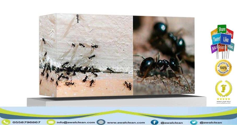 حشرات تدمر الحوائط