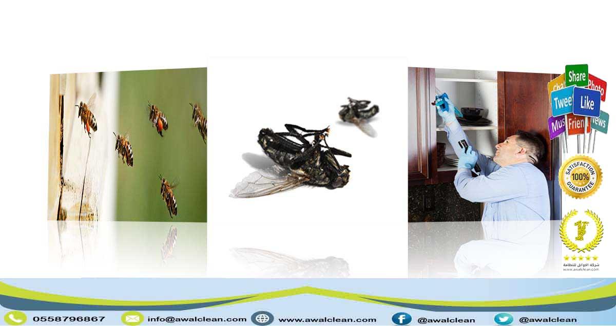 مكافحة حشرات في دبي
