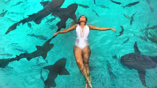 Swim with nurse sharks in the bahamas