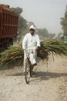 Cyclist, India 2013.