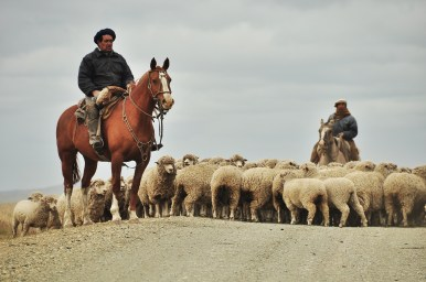 We really enjoyed the few shepherds we met along the way.