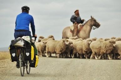 Cycling through the sheep.