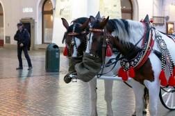 Carriage Horses in Rynek Główny