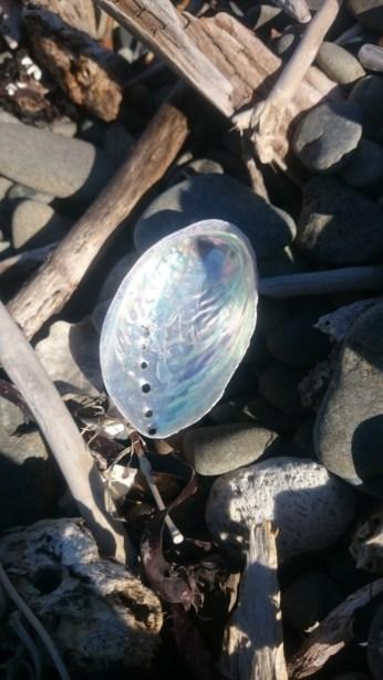 shell on ground