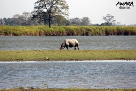 Explore Kaziranga National Park - The Complete Guide