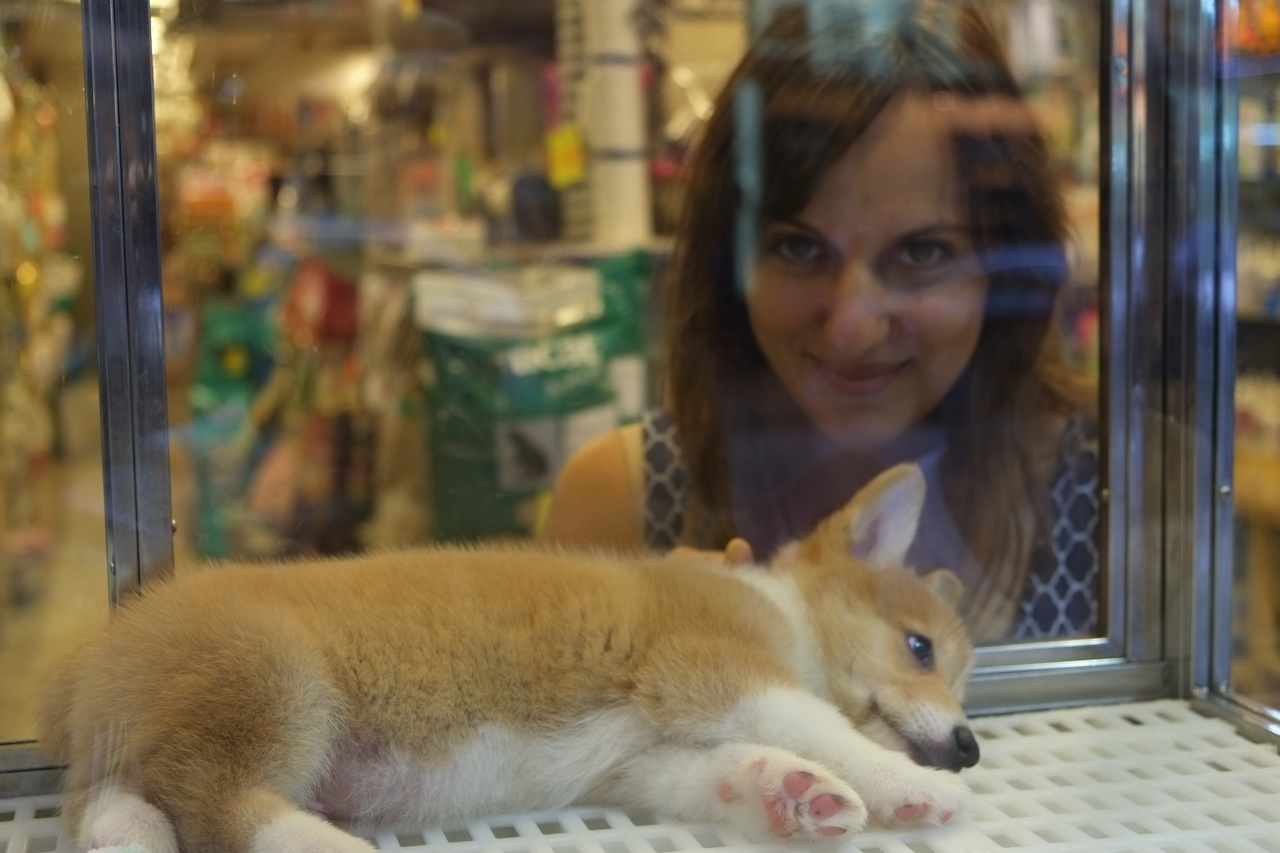 Pet Stores That Sell Dogs Near