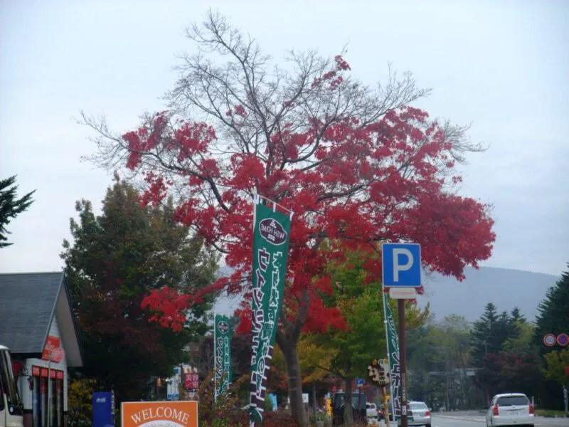 入山峠入口の紅葉