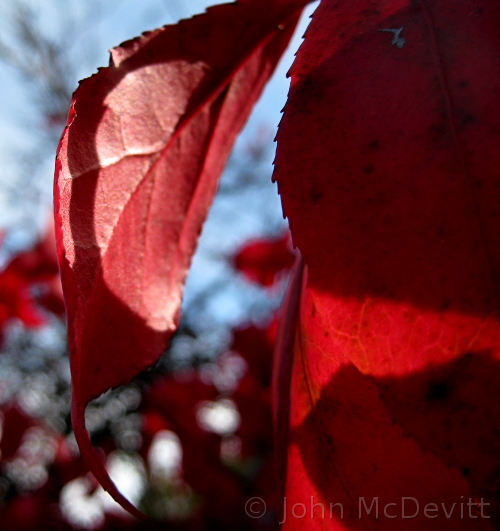 Monday Musings: Fall Fire and Our Burning Bush (2/2)