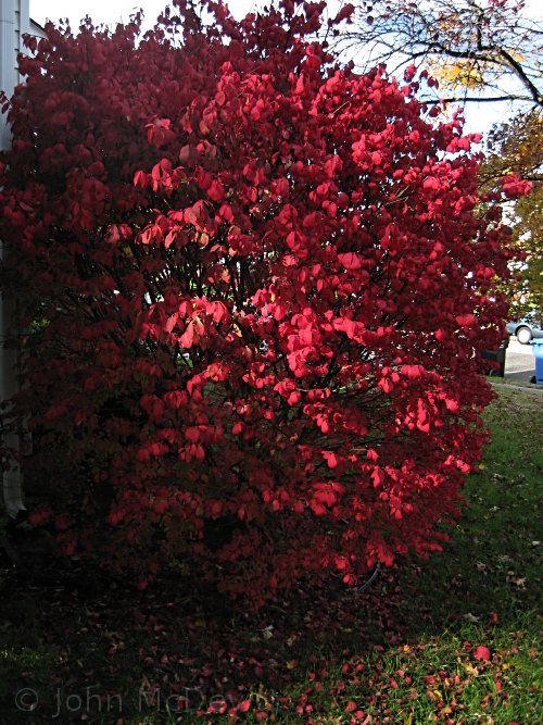 Monday Musings: Fall Fire and Our Burning Bush (1/2)