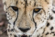 Cheetah Park