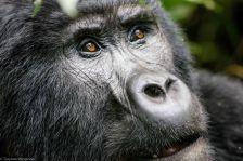 Bwindi Impenetrable Rainforest