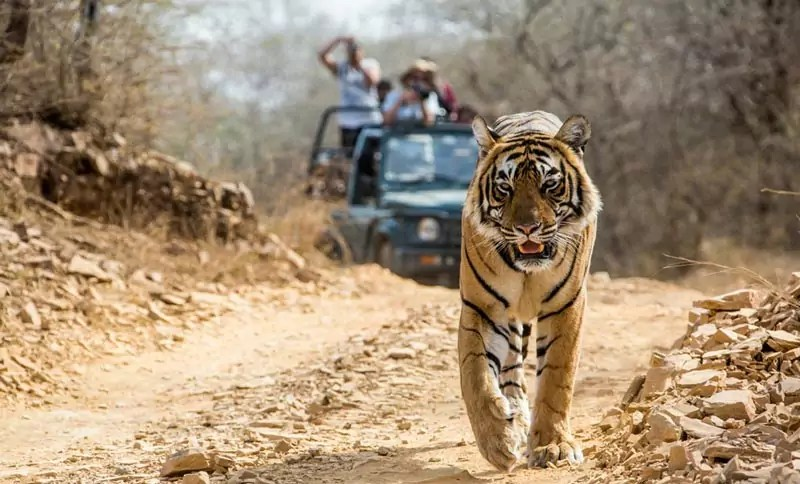 Corbett National Park - 5 Most Awesome Wildlife Destinations in the World