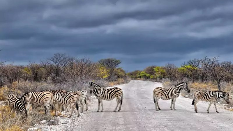 safari1 - 5 Most Awesome Wildlife Destinations in the World