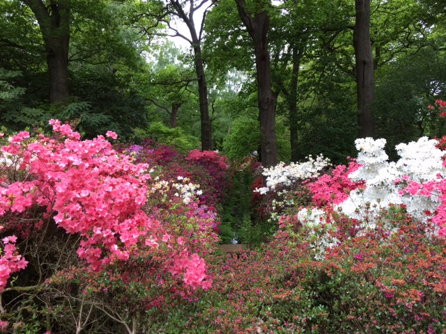 Isabella Plantation in RIchmond Park